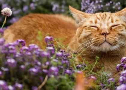 flowers that are toxic to cats